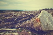 What does deforestation cause?