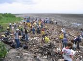 Nettoyage des plages de la Méditerranée