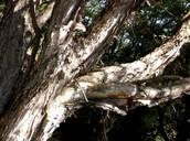 Paper Back Tree