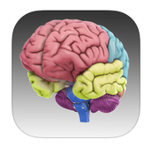 The Brain 3D Augmented Reality App
