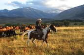 Work on a western ranch