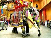 India, su ambiente exótico te espera...