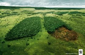 Deforestation Lungs