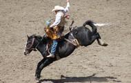 Saddle Broncs