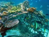 Artificial Reef using a boat frame
