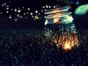 Catch FIreflies