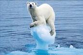 Melting Icecaps