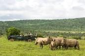 Natural Habitat of Sumatran Rhino