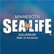 Minnesota sea life aquarium, mall of america