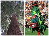 Mascot: California Redwood Tree