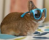 me as a bunny