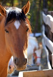 Effects of Equine Assisted Therapy on Children with Autism and Asperger's Syndrome