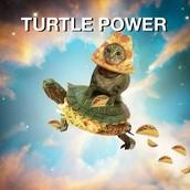 TURTLE POWER!!!