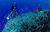 Scuba Diving !