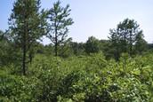 Albany Pine Bush Preserve/ Old Westbury Gardens