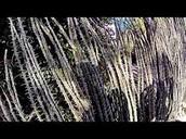 Thorny Brush