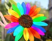 the rainthor flower
