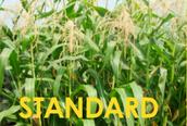 Standard Corn