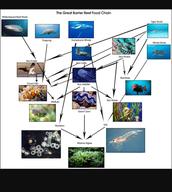 Coral Reef Foodweb