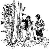Cutting Lumber