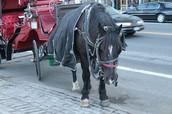 Horses' break