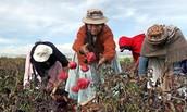 Farming in Bolivia