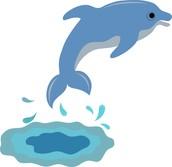 Dolphin Depot