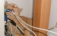 Cat chewing power cords