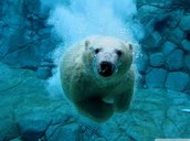 Polar Bear Swim!