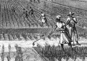 Slaves working on a South Carolinian plantation