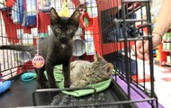 Adopt Skeletor & Sugar!