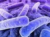 Biotic Organisms