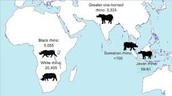 Locations of the Rhino Species