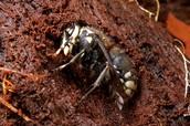 Bee Hibernating