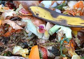 Start a compost bin to help the environment