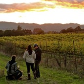 Vines are sustainably-farmed