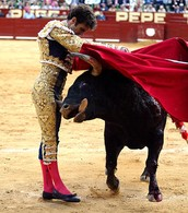 What happens to a bull if the bull severely injures the matador?