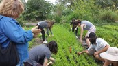 Removing weeds from Inspirational Garden