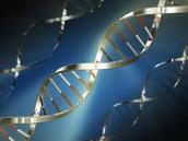DNA Biotechnology