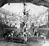 Acrobatics at a Music Hall
