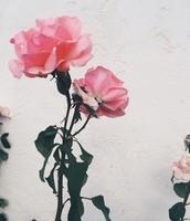 Mary's Rose Garden