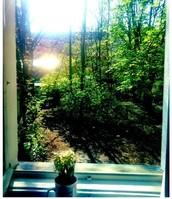 My Garden view!