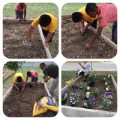 Ms. Major & Her Panthers Have Started Their Own Garden!