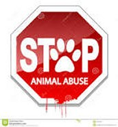 Stoping animal abused