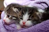 Cats closing thir eyes