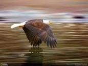 You can see a eagle you can zip line, fish, canoe, sight see and a lot more.