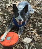 Angela's Dog, Bleu