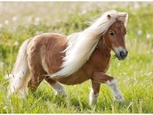 The pony Really beautiful and  Just like children