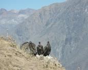 Rick and a Condor