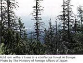acid rain - destroyed vegetation